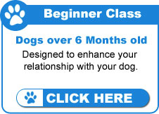 Beginner Dog Training Classes
